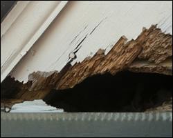 Squirrel damage in Winchester VA