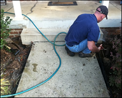 Dead animal removal Winchester VA